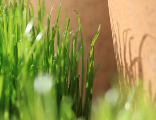 Nettiradiomme lähettää pääsiäisekstran – osallistu toivelaululähetykseen
